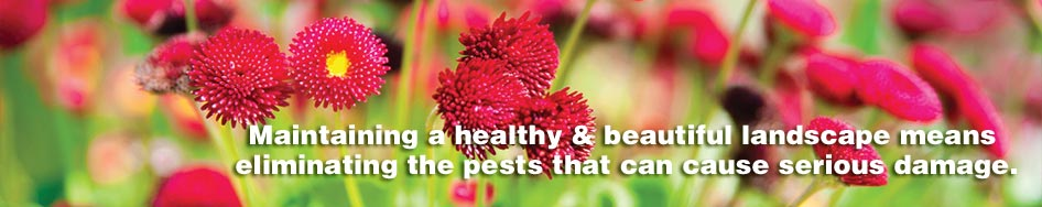 pests_header_image
